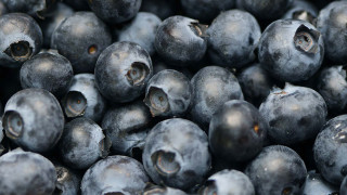 ontario farm fresh blueberries