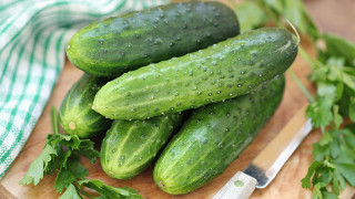 ontario farm fresh cucumbers