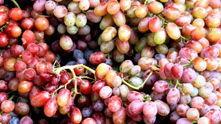 ontario farm fresh grapes