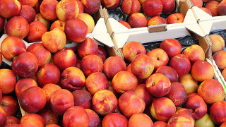 ontario farm fresh nectarines