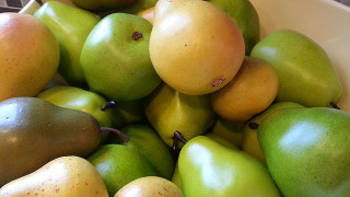 ontario farm fresh pears