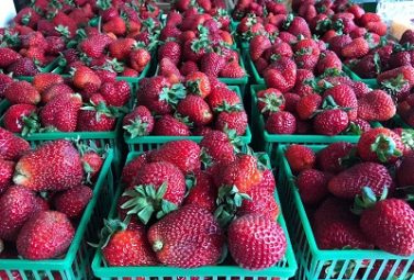 Ontario Strawberries Have Arrived
